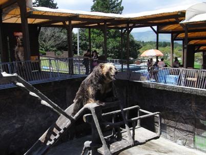 カドリー・ドミニオンの熊